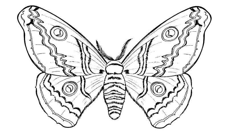 Dibujos de INSECTOS (Para Colorear y Pintar)