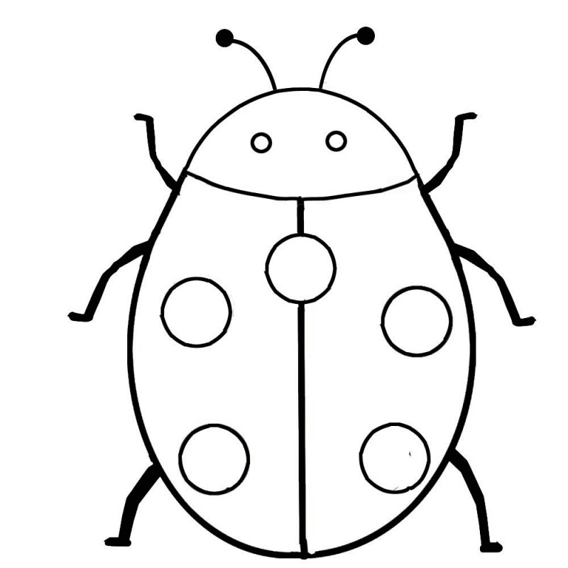 Parts of an insect coloring pages