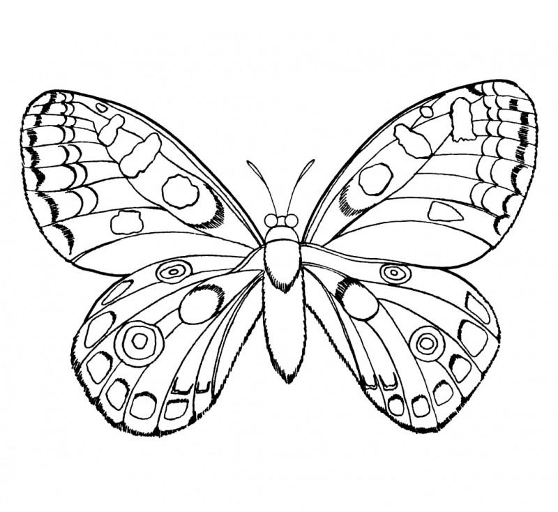 Dibujos De Insectos Para Colorear Y Pintar