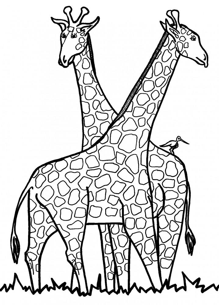 Dibujos de jirafas para colorear y pintar - Dibujos originales para pintar ...