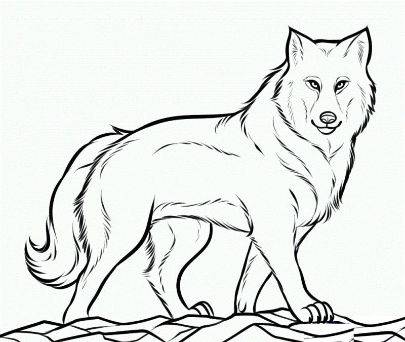 Lobos Faciles De Dibujar
