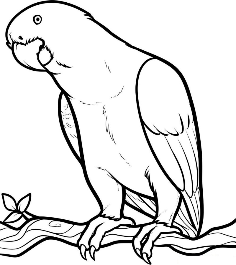 Line Drawing Of Animals And Birds : Dibujos de loros para colorear y pintar
