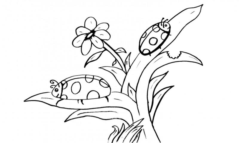 Dibujos de MARIQUITAS (Para Colorear y Pintar)