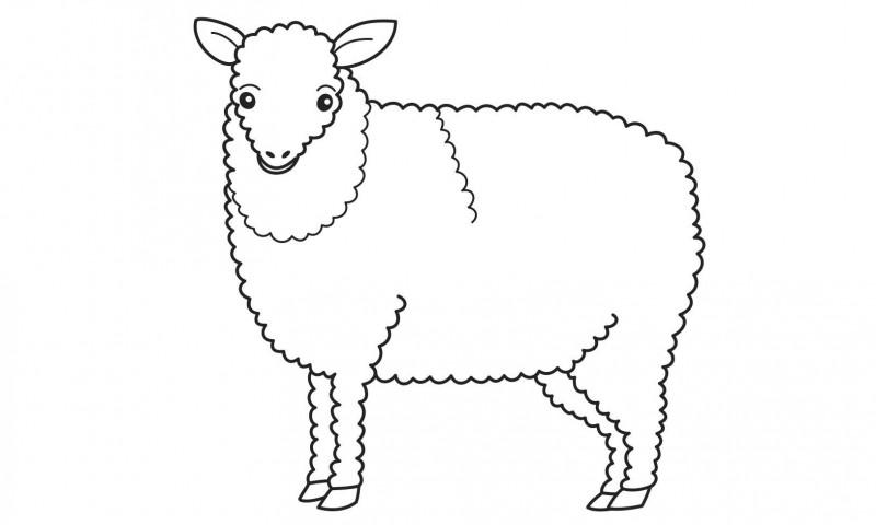 Dibujos de ovejas