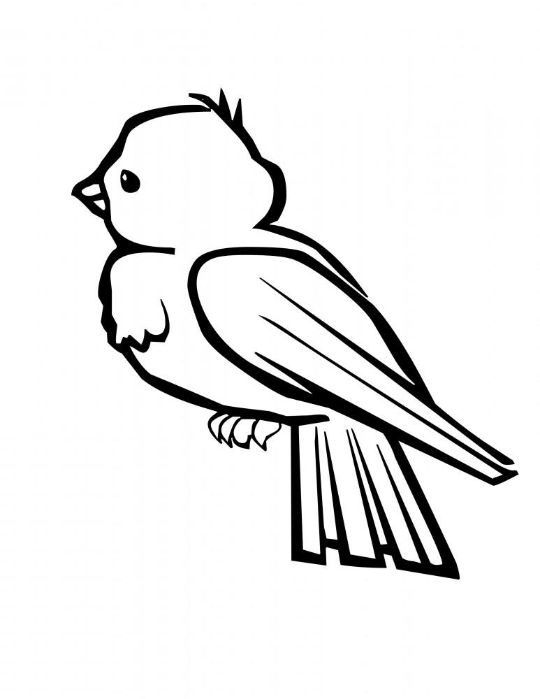 Dibujos de p jaros para colorear y pintar for Cute parrot coloring pages