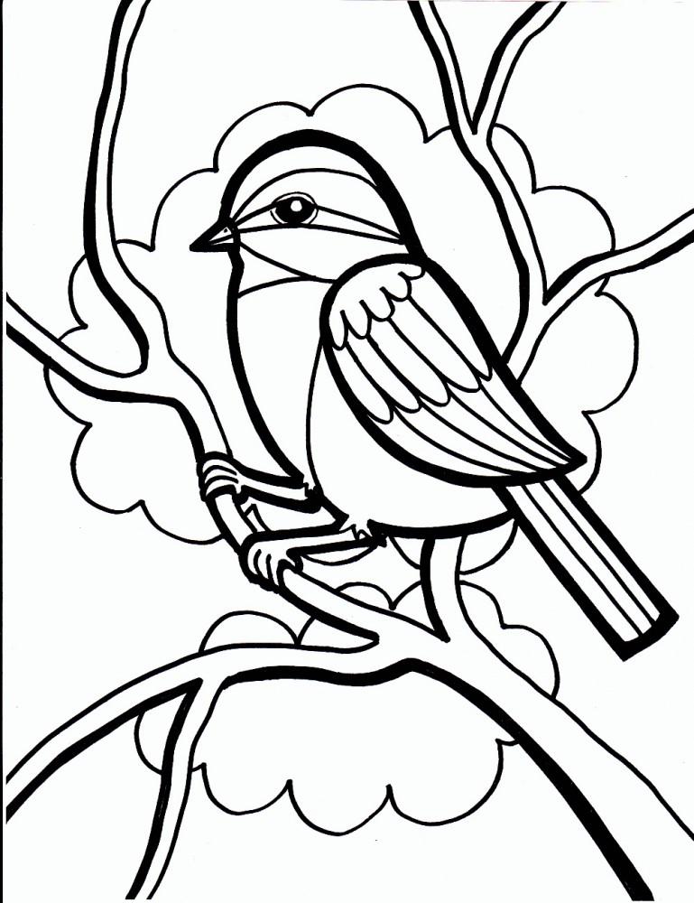 Dibujos de PÁJAROS (Para Colorear y Pintar)