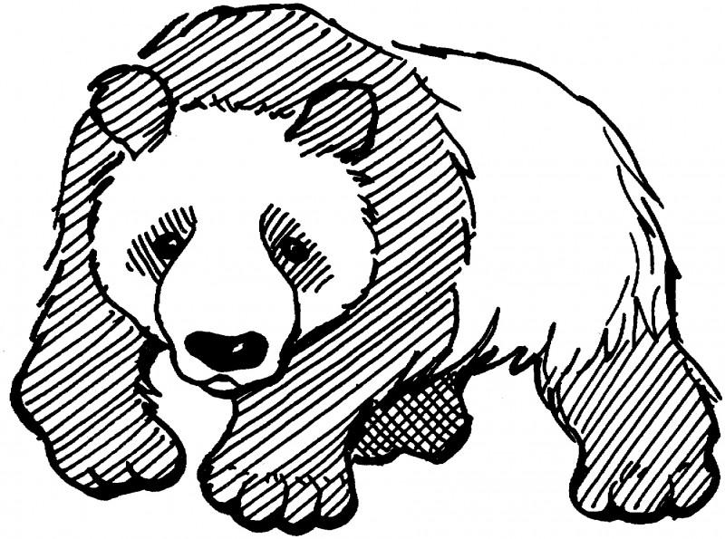 Dibujos de PANDAS (Para Colorear y Pintar)