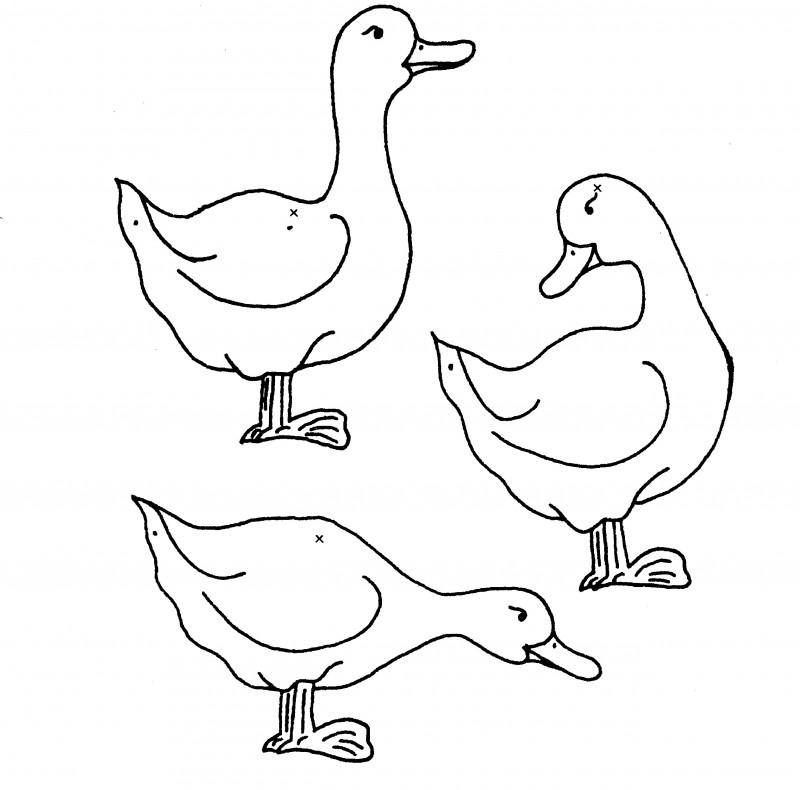 Dibujos De Patos Para Colorear Y Pintar