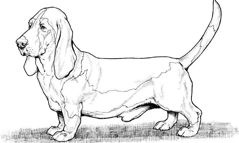 Dibujos De Perros Para Colorear Y Pintar