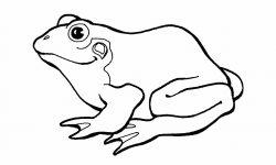 Dibujos de ranas