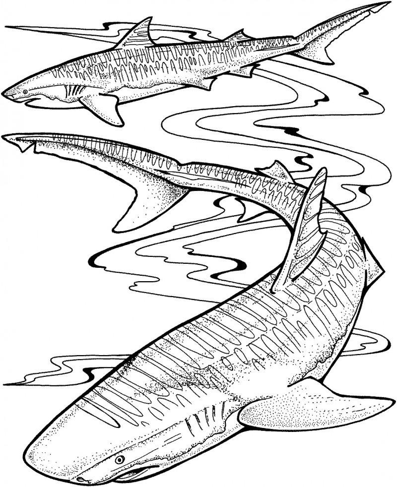 Dibujos De Tiburones Para Colorear Y Pintar