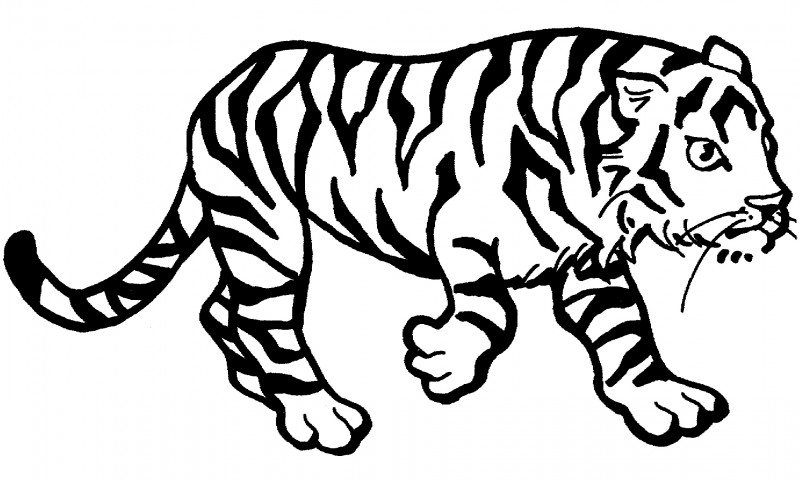 Dibujos De Caras De Tigres Para Colorear: Dibujos De TIGRES (Para Colorear Y Pintar