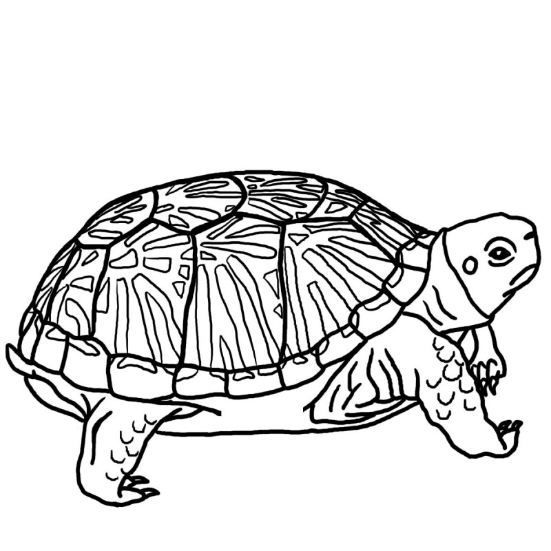 Dibujos de TORTUGAS (Para Colorear y Pintar)