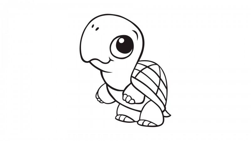 Line Drawings Of Baby Animals : Dibujos de tortugas para colorear y pintar
