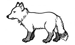 Dibujos de zorros
