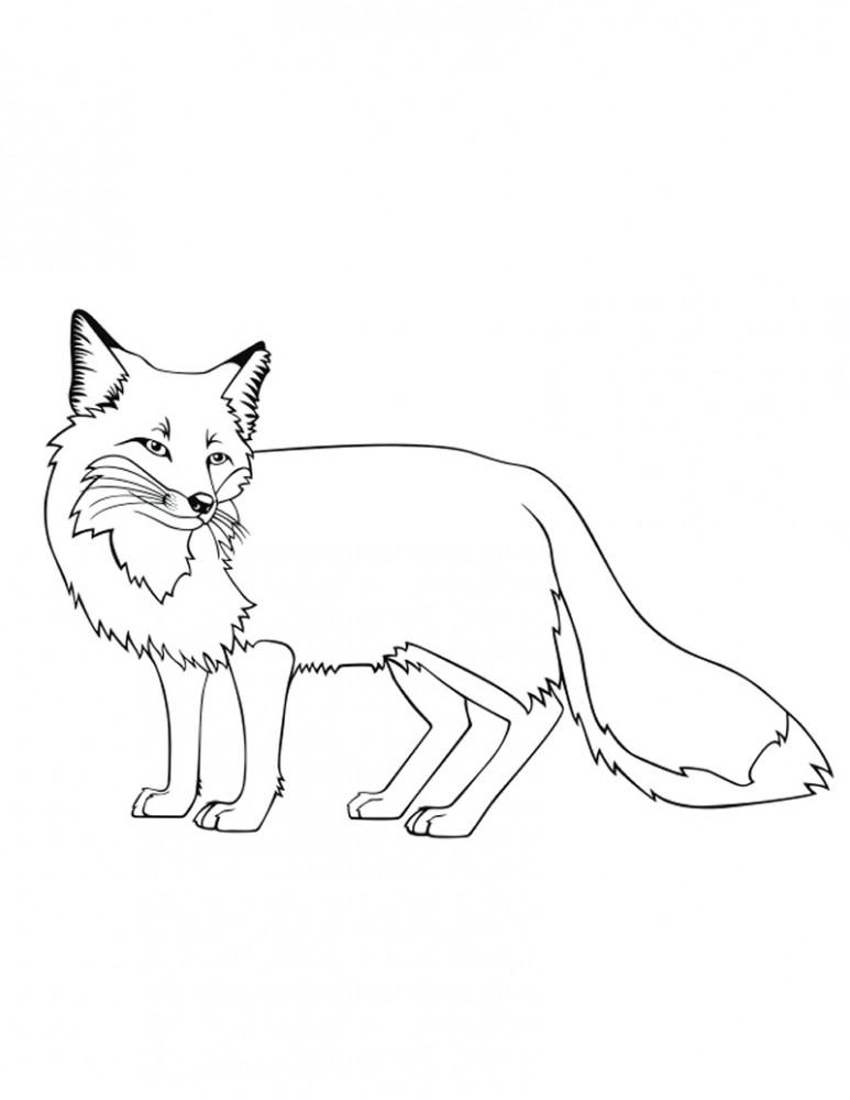 Dibujos de ZORROS (Para Colorear y Pintar)