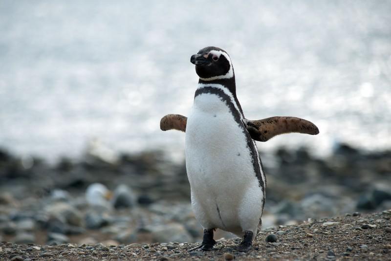 El juego de las palabras encadenadas-https://www.anipedia.net/imagenes/donde-viven-los-pinguinos.jpg
