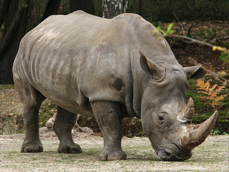 Dónde viven los rinocerontes de Java