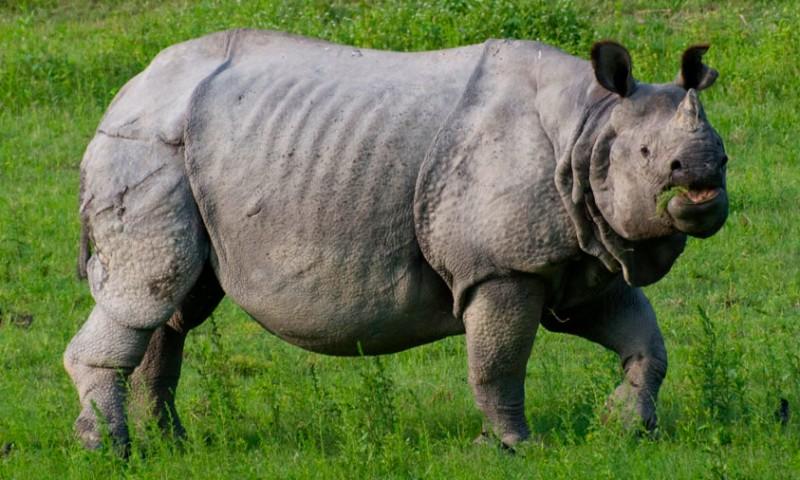 Dónde viven los rinocerontes indios