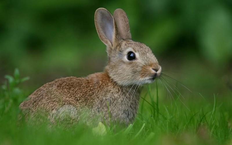 Ejercicio conejos