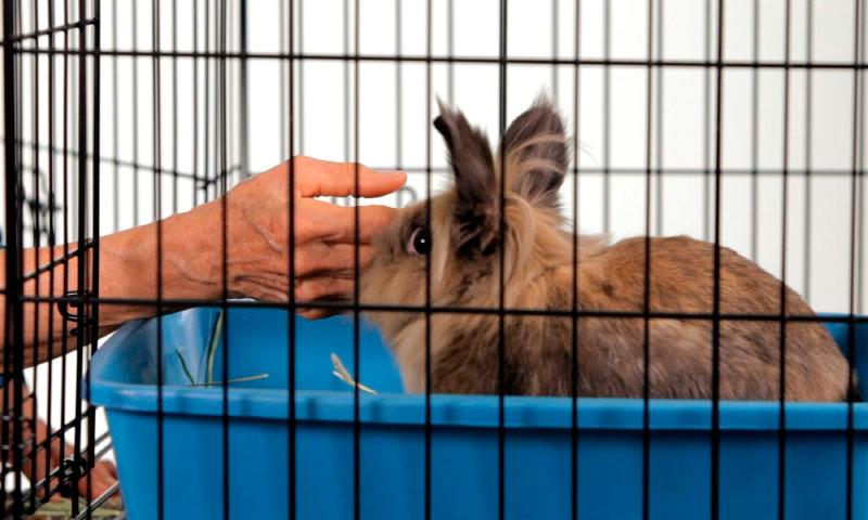 Como elegir las jaulas para conejos