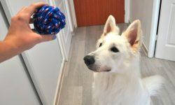 Los mejores accesorios para mascotas