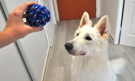 Elegir los mejores accesorios para mascotas