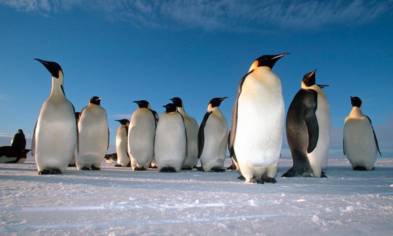 Lista de Especies de Pingüinos (Tipos de pingüinos)