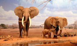 Evolución de los elefantes
