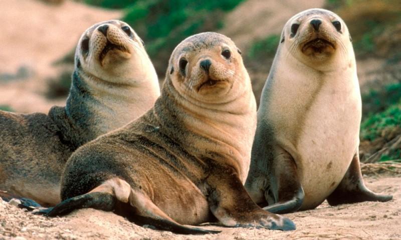 Animales Informacion En La Enciclopedia Animal Anipedia
