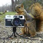 Fotos de ardillas