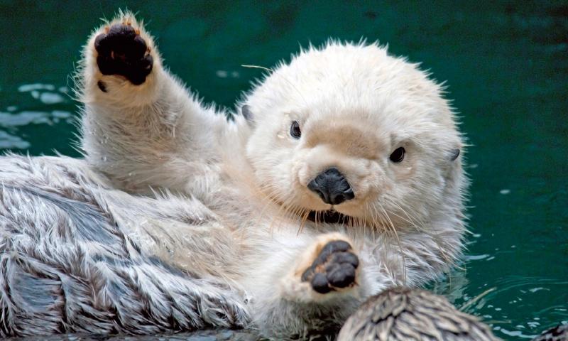 Fotos de animales bebe