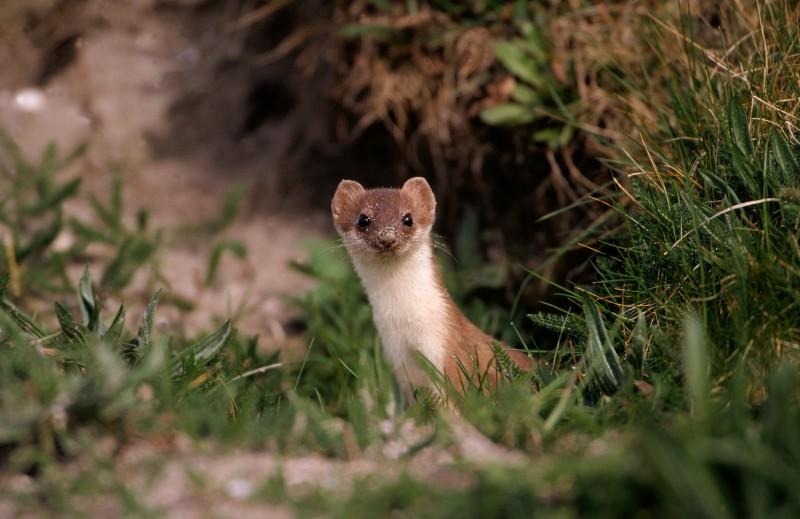 Las mejores fotos de animales peque os im genes for Imagenes de estanques pequenos