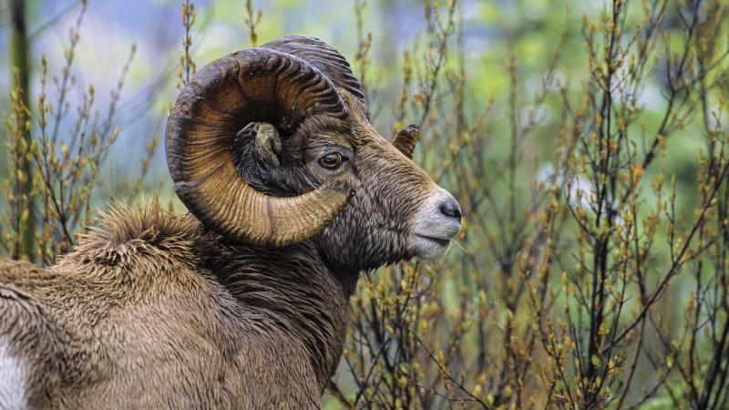 Las Mejores Fotos De Animales Salvajes Imágenes