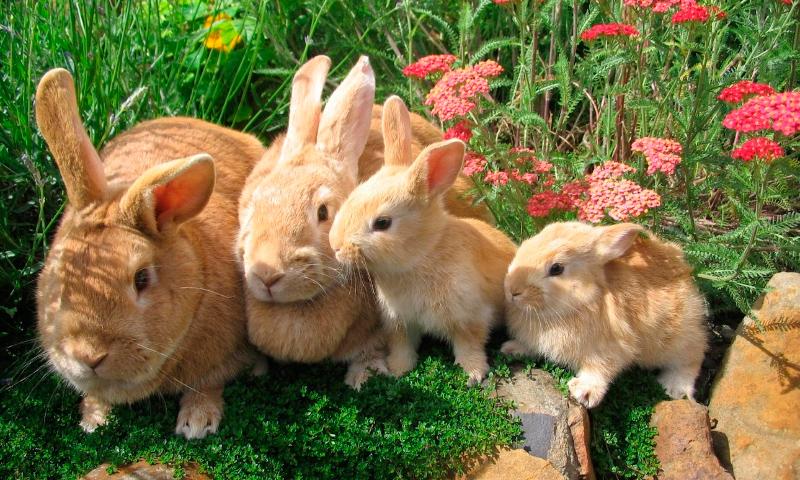 Las Mejores FOTOS DE CONEJOS 【 Imágenes De Conejos 】