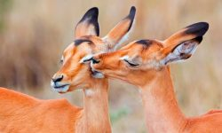 Fotos de animales bonitos