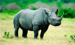 Fotos de animales en peligro de extinción