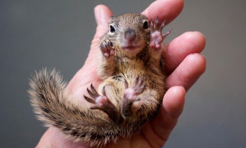 Fotos de animales mamíferos