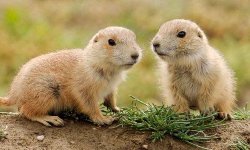 Fotos de animales pequeños
