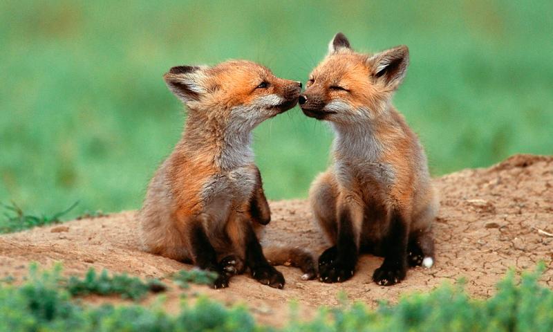 las mejores fotos de animales salvajes 【 imágenes