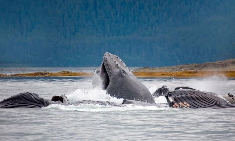Fotos de ballenas jorobadas