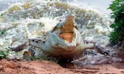 Fotos de cocodrilos