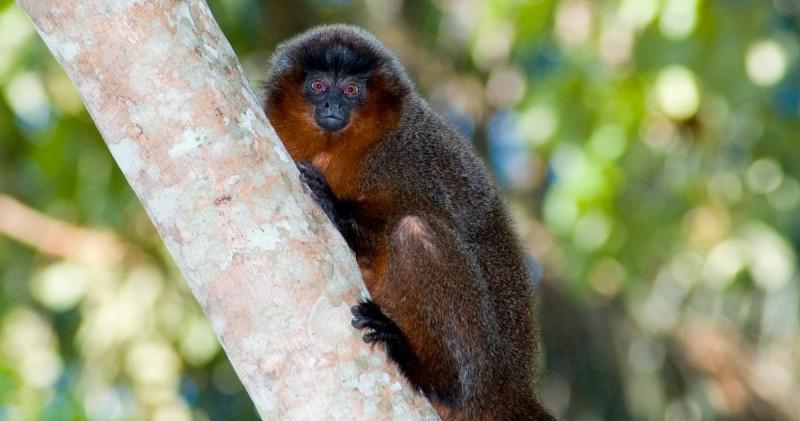 Fotos de monos tití