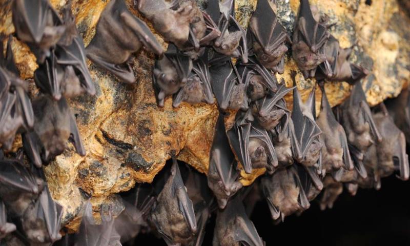 Las mejores FOTOS DE MURCIÉLAGOS 【 Imágenes de murciélagos