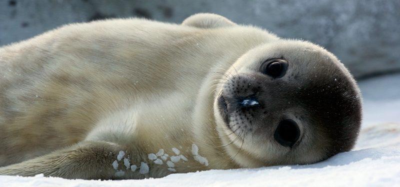 Resultado de imagen de focas