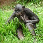 Fotos de monos