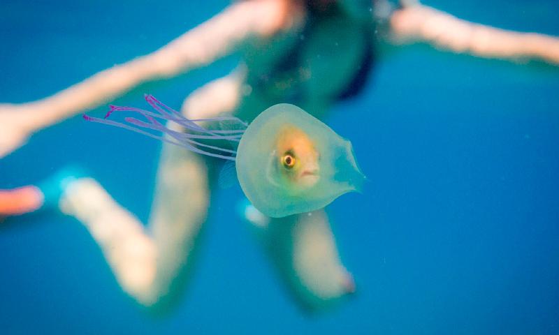 Fotos de peces