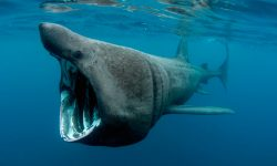 Fotos de tiburones