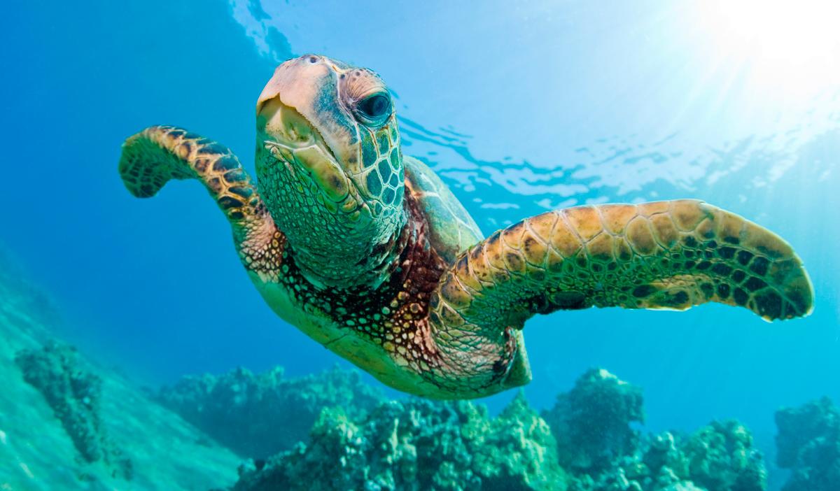 Resultado de imagen para Tortugas marinas