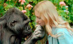 Gorila Koko